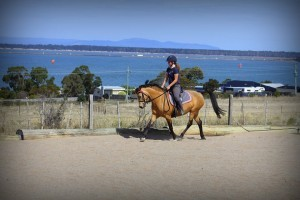 Compete a high level dressage