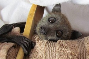 Rescuing injured and orphaned wildlife