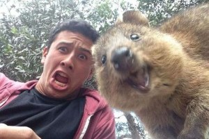 PHOTOBOMBING the SELFIES of local Aussie fauna!